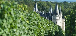 Wines of the Loire