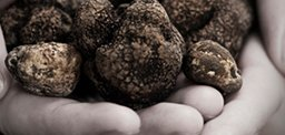 Black & White Truffle Dinner