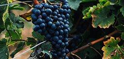 La Cuisine Et Les Vins De Bourgogne